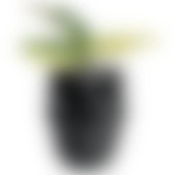 Mexico Plant Pot (3 variants)