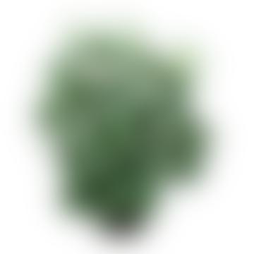 Grand Illusions Faux Fittonia Plant in Pot