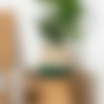 Medium Green & Natural Raffia Basket - Bottom Stripe