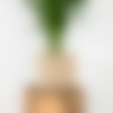 Medium Green & Natural Raffia Basket - Spot