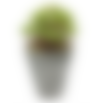 Faux Sedum Succulent In A Pot
