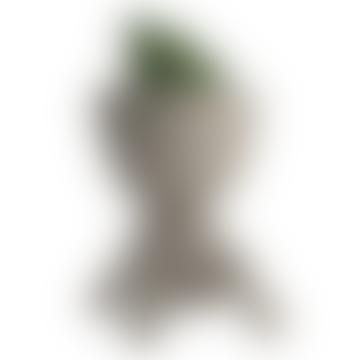 Turtle Planter / Champagne Cooler