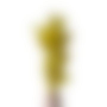 livs Dried Flowers - Lagurus Bunny Tail, Bright Yellow
