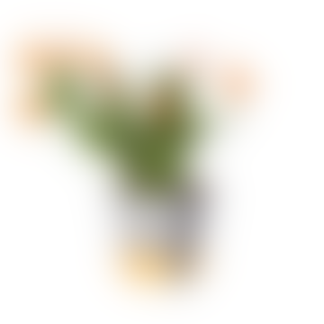 Plant Pot Cover Medium Spores