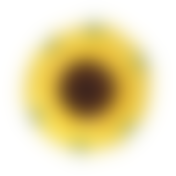 Bowl Sunflower