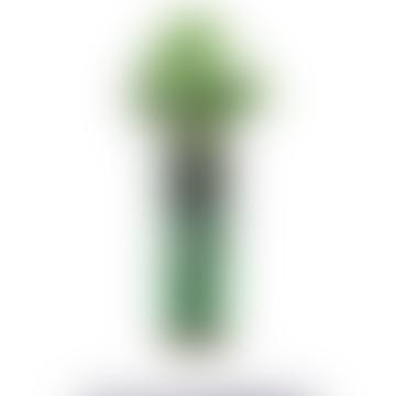 Tarragon Hydro Herb Kit