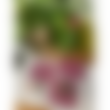 Nina d Homeware Ida Lilja Coasters Square Set Of 4
