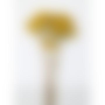 Tiges séchées d'achillée millefeuille naturelle jaune