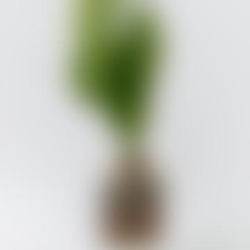 Speckle Ceramic Avocado Planter