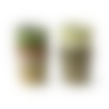 Ensemble de quatre tasses d'expresso vert printemps vert