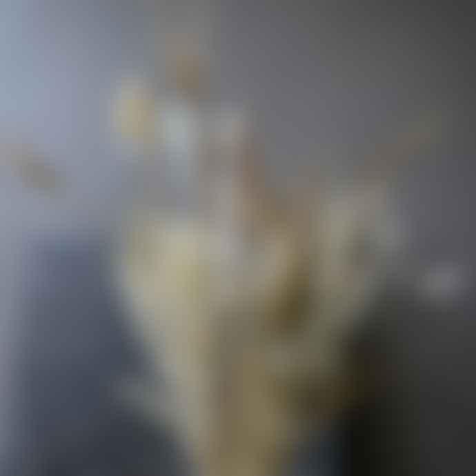 livs Dried Flower Bouquet - Poppy Natural