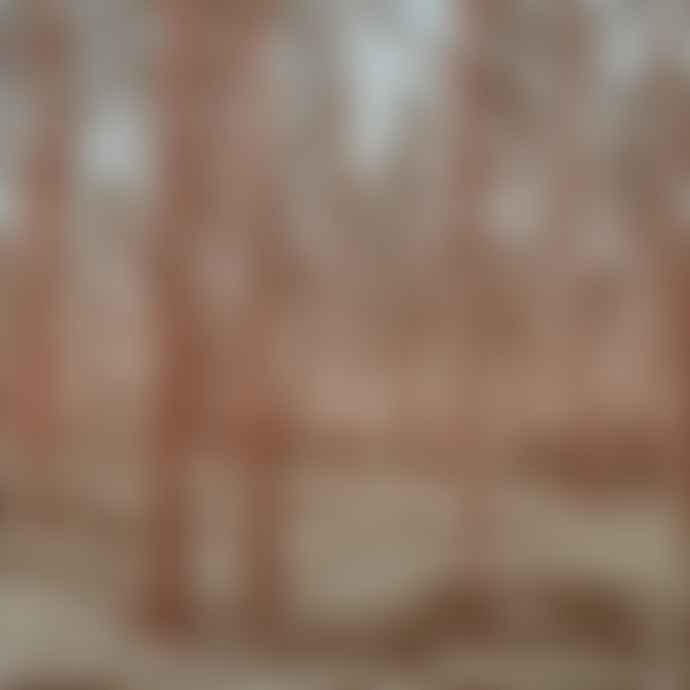 Anna Harley Swedish Pines Limited Edition Screen Print