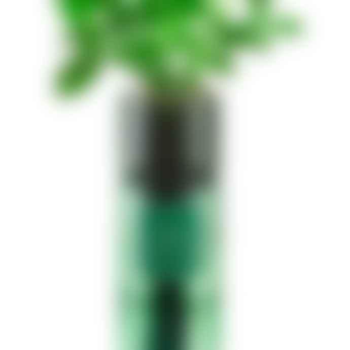 Hydro Herb Basil Hydro Herb Kit