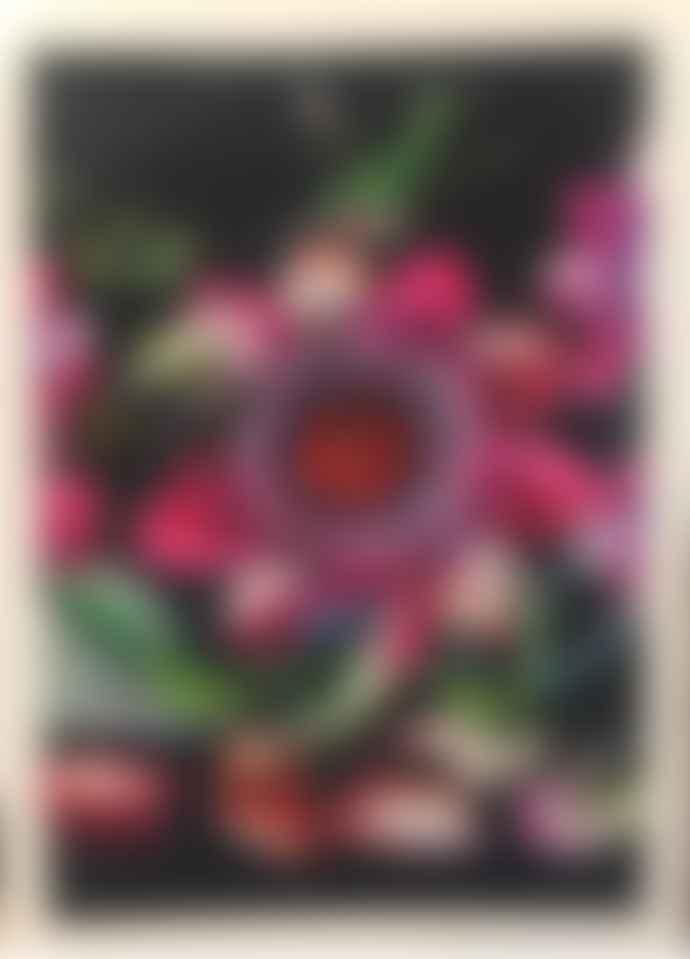 Diana Wilson Arcana Hummingbird A3 Art Print