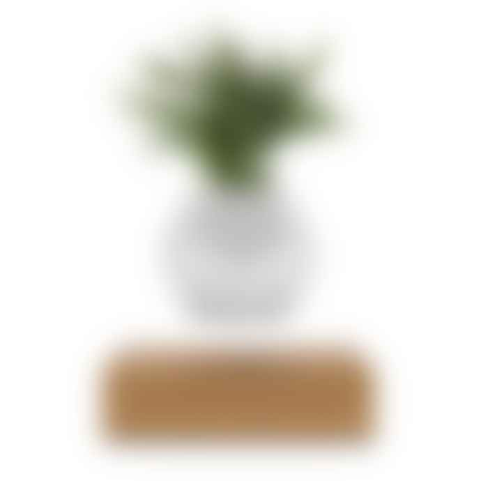 Flyte Lyfe Planter