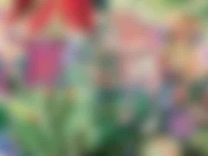 Djeco  Puzzle Gallery Rainbow Tigers 1000 Piece Jigsaw Age 9+