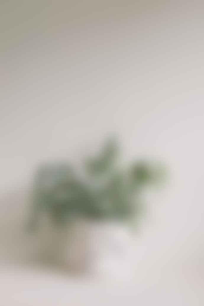 Louise Madzia  Encircle Plant Pot