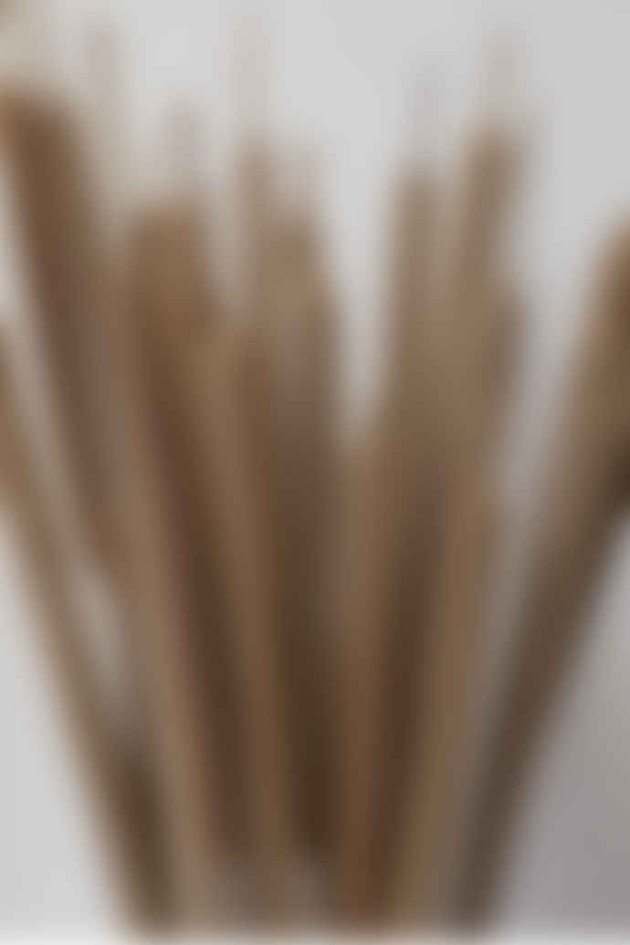 Garden State Candles Dried Natural Typha