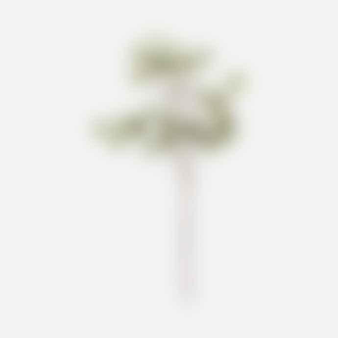 House Doctor Eucalyptus, Nature