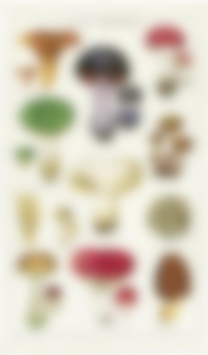 Cavallini & Co Mushrooms - Tea Towel