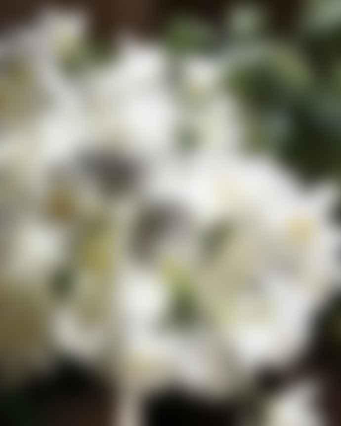 Terrace and Garden Blossom White L 50 cm