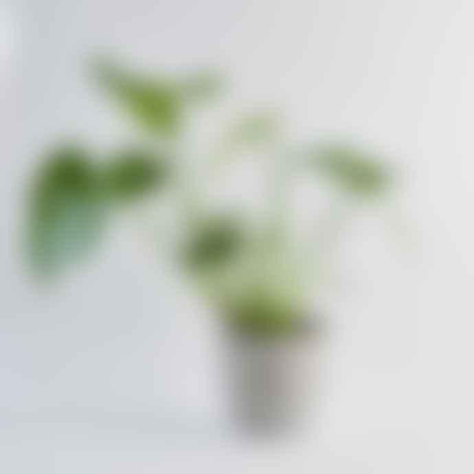 Botanique Workshop Concrete Plant Pot Large