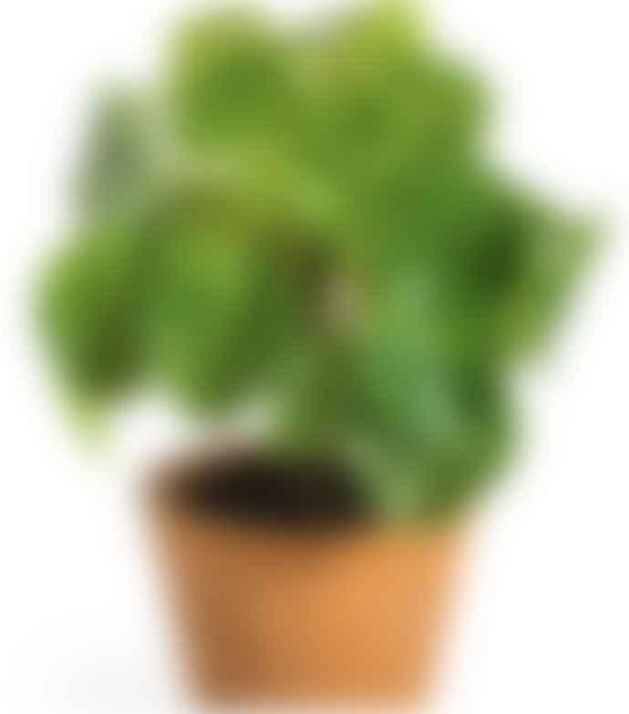 Faux Pilea Money Plant