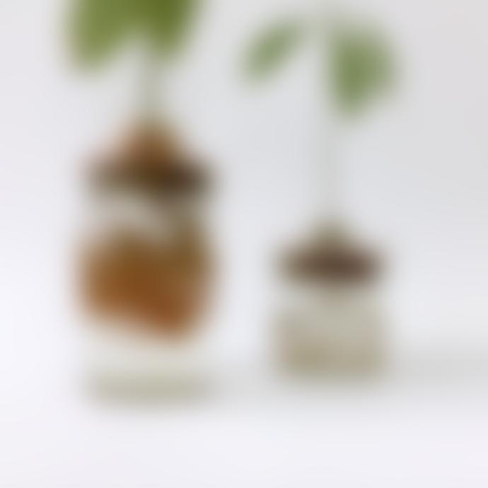Julia Davey Studio Janneke Grow Your Own Avocado Plant Starter Kit