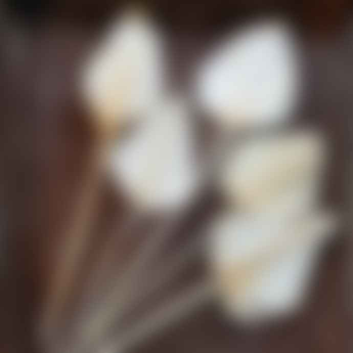 livs Dried Flowers - Bundle of 5 Palm Spears, Bleached White