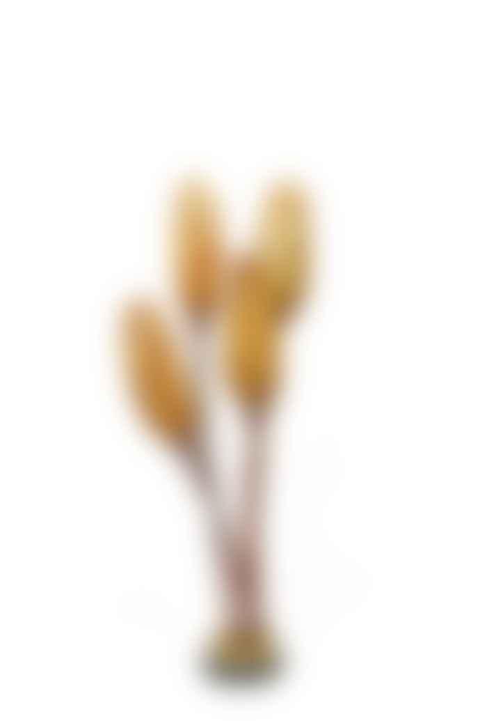 Cuemars Dried Flowers - Dried Protea Pendula Yellow Bunch