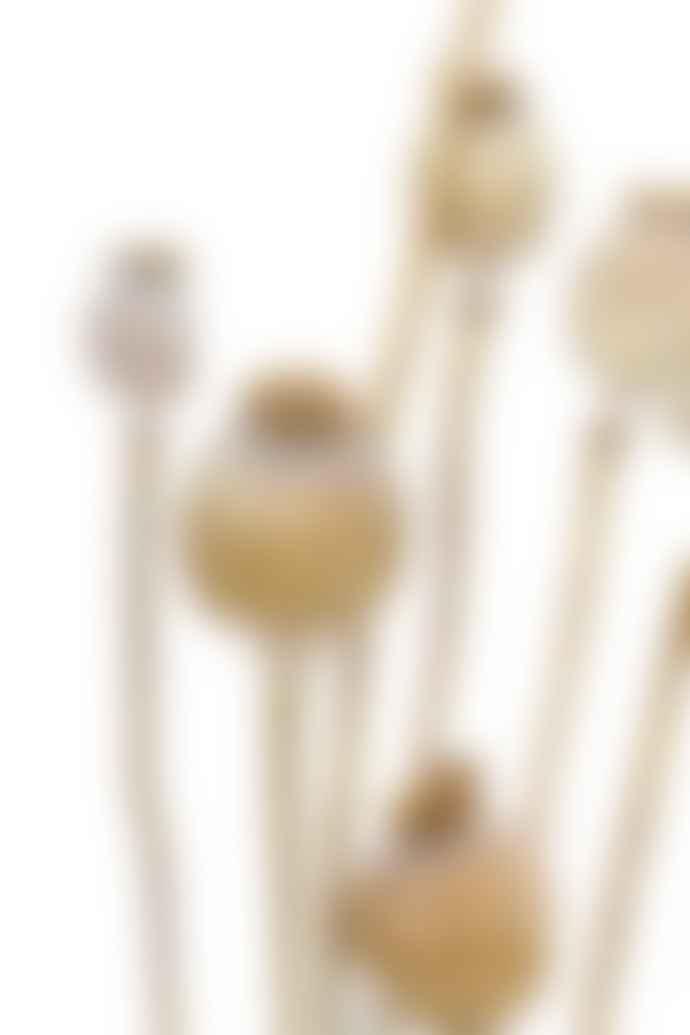 Cuemars Dried Flowers - Dried Poppy Seed Stems