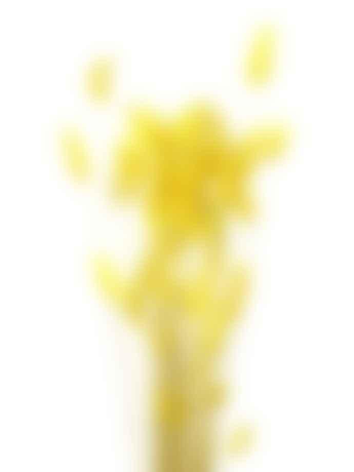 Cuemars Dried Flowers - Dried Lagurus Ovatus Yellow Bunch