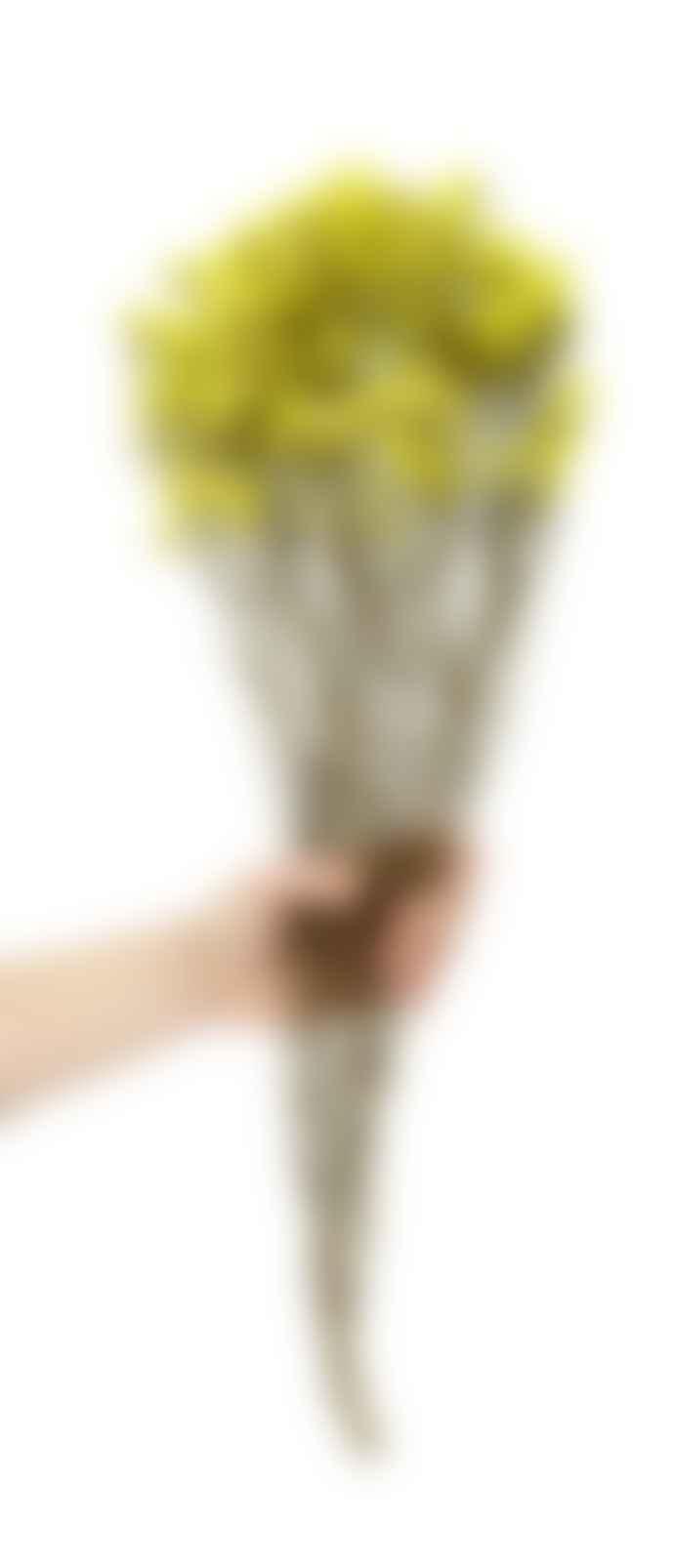 Cuemars Dried Flowers - Dried Spring Yellow Bunch