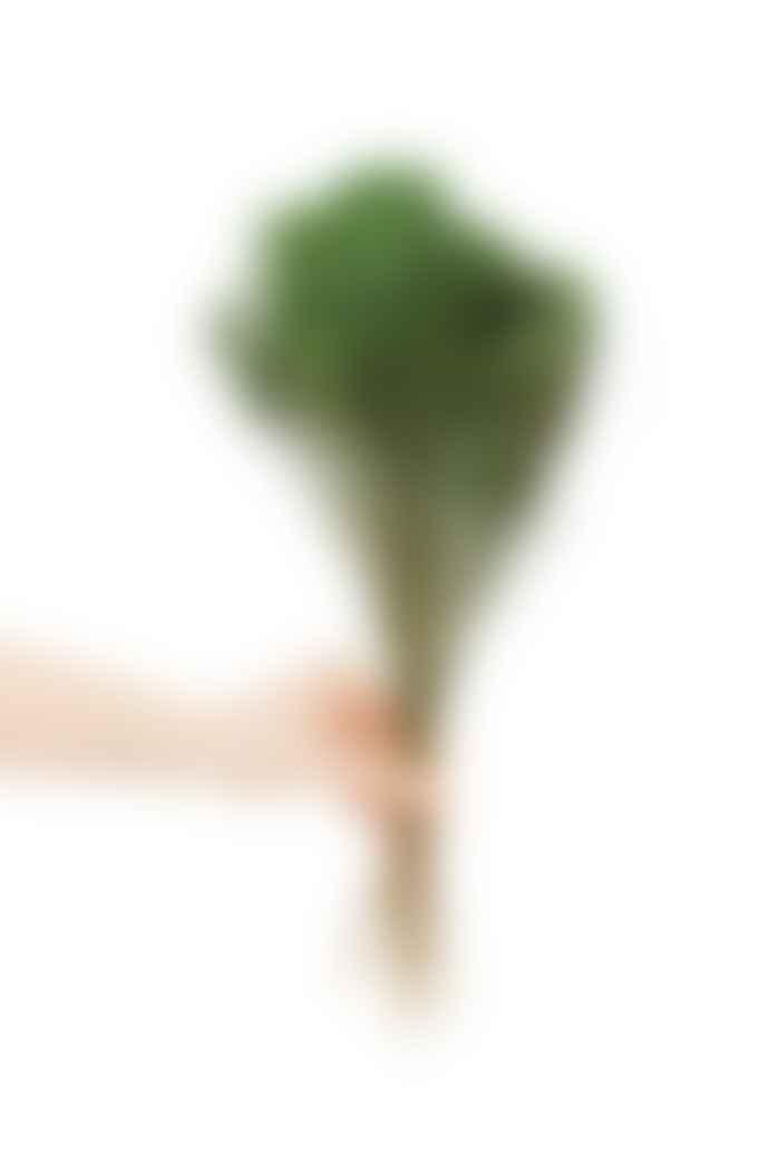 Cuemars Dried Flowers - Dried Broom Bloom Green