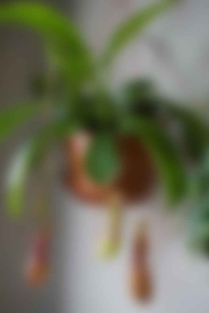 Gregory + Tapping Nepenthes Plant