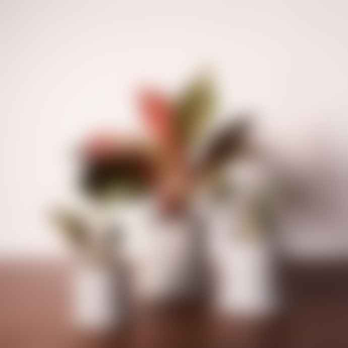 Anther + Moss Dalton Ash Plant Pot 15 Cm