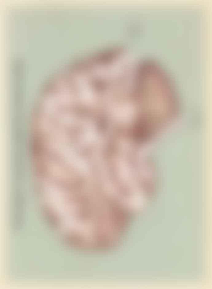 Big Picture Press Anatomicum Activity Book