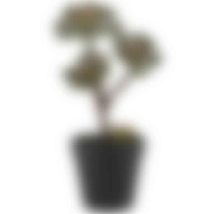 Grand Illusions Faux Succulent In Pot