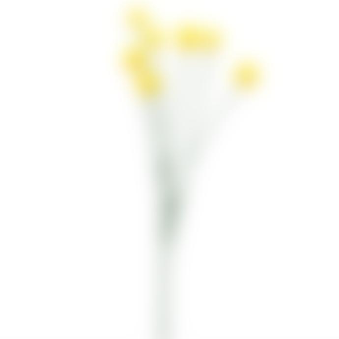 Gisela Graham Set Of 3 Yellow Billy Bob Spray