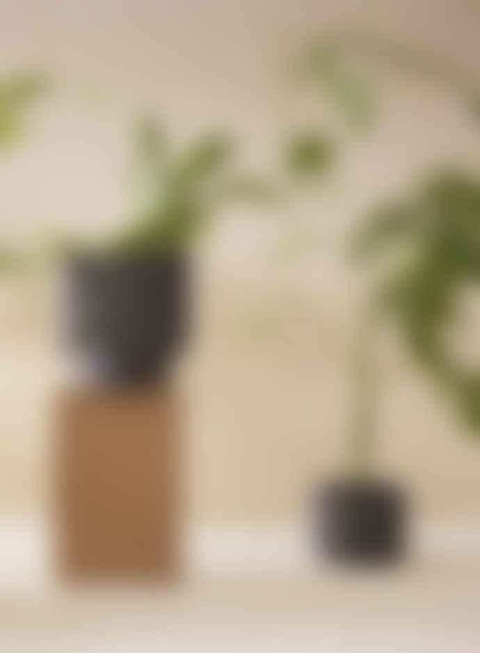 Aaron Probyn Botany Black Porcelain Plant Pot with Dish