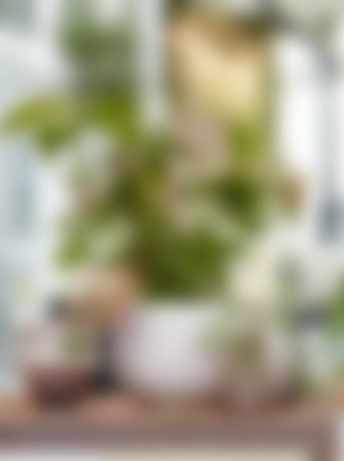 Wikholm Form Jackie Textured Plant Pot In Pink Large