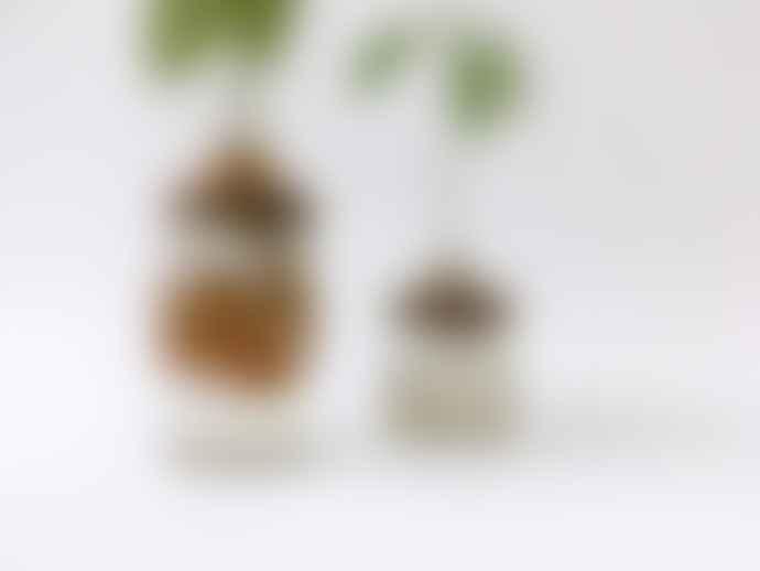 jan.ne.ke Ceramic Avocado Handmade DIY Growing Kit