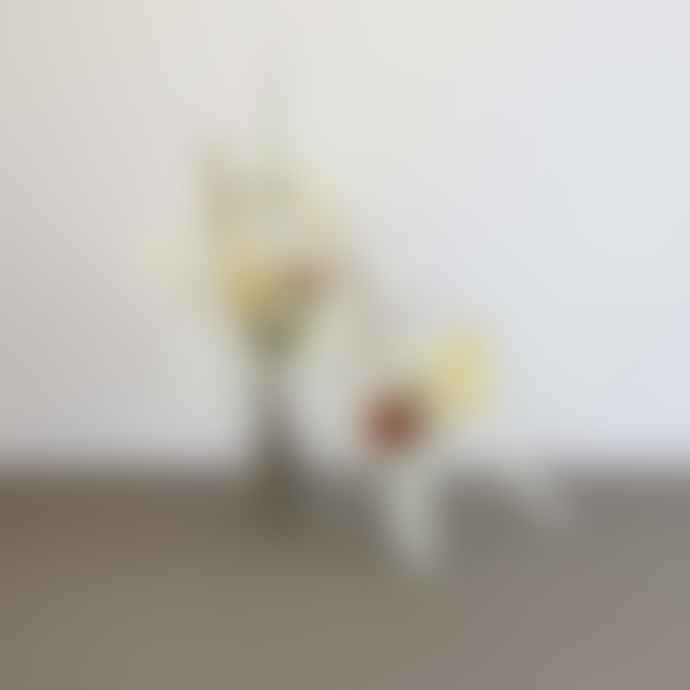 Catkin & Pussywillow Dried Flower Duo Jar Set