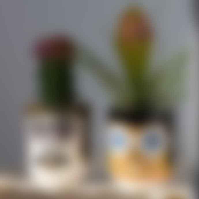 Kitsch Kitchen Pablo plant pot